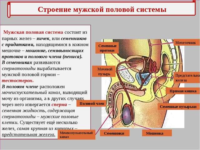 Лечение мочеполовой системы у мужчин